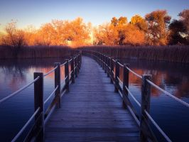 Bending Autumn's Path by JANorlin