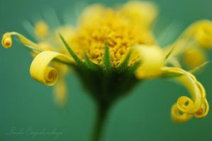 yellow1... by TheRedGirl