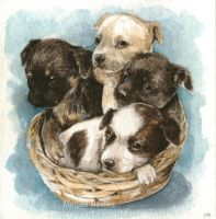 Puppy Basket by Pannya
