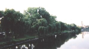 Willows on the River by breezybriefs