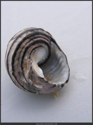 Unrestricted Object Stock - Sea Shell 10 by shelldevil