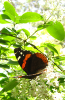 Butterfly Baby by TheMarchStudios