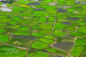 Green patch by itsmejegan