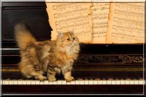 Le pianiste by FireMood