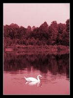 Lonesome Swan by OATStheman