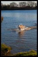 Dog Splashing About. by metronewman