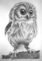 Owl by neilameane