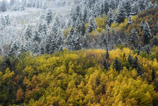 Fall becomes winter by yuvi2