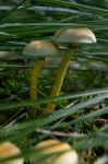pair under a shade by tanja1983