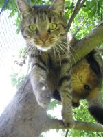 Cat in tree by TheEndWhereIBegin