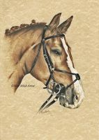 Horse's Portraits by AlyWiish