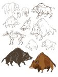 boars by morteraphan
