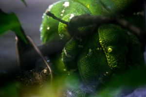 The green eye of fear... by Seb-Photos