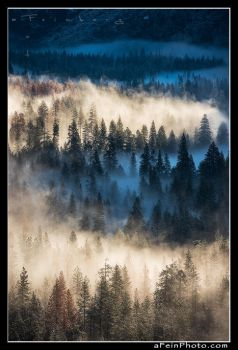 Yosemite Valley Fog I by aFeinPhoto-com