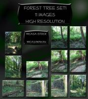 forest tree set wicasa-stock by Wicasa-stock