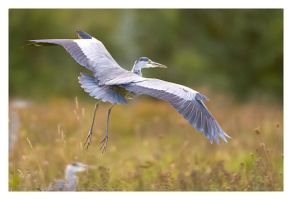 Heron Takeoff by Neutron2K