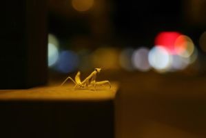 Praying Mantis by DoomWillFindYou