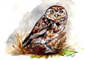 Little Owl print by Cute-spider86
