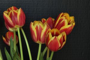 TuLilys by digitalpix4all