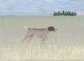 The German Wirehaired Pointer by ekvogl