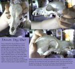 Domestic Dog Skull by daemonikk
