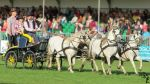 NSD 2014 - Pony Carriage 4 by bumblebee-stocks