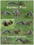 Squirrel Pack by empty-paper-stock