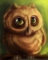 little owl by himikGIRL