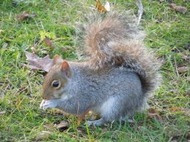 Squirrel by Ruth-1