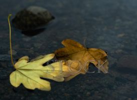 Two-Leaves-1 by Evil-e33