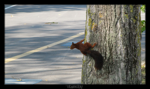 Red Squirrel by MrDeKat