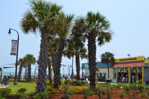 Myrtle Beach Palm Trees by MrsChibi