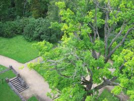 above the trees by indrucis