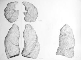 Lung Study by CaptainFizz