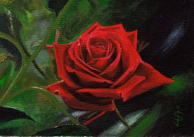 A Valentine Rose by NorthumbrianArtist