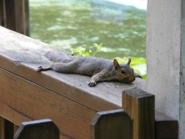 Chillaxin' Squirrel by Forgotten-Munkey