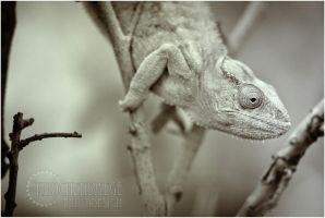 Chameleon by RemusSirion