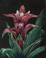 Bromeliad by Wolf-Daughter