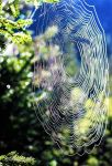 where is the spider - 2016 by Bildband