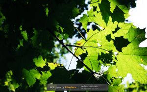Green Sky WP by prdx-design