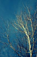 White Branches by CountryBumkin