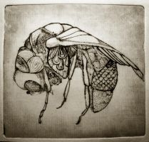Fly zinc engraving by Ajerf