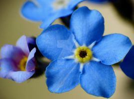 Forget-Me-Nots 11 by zaphotonista