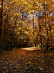 Autumn 2007 - 09 by Ayelie-stock