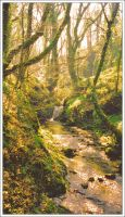 Lydford Gorge 2 by Forestina-Fotos