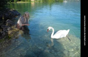 Swan Lake 13 by Kuoma-stock