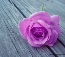 the feeling, rose... by lindahabiba