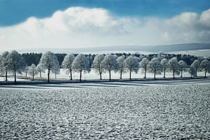 winter scape by rockmylife