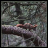 Little Squirrel 1 by Globaludodesign