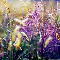 The Fields Of Color II by MarcoHeisler